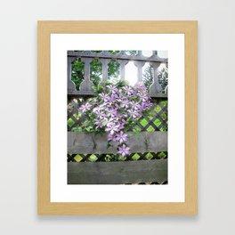 Purple Clematis Flower Vine Basking in Sunlight on a Wooden Garden Arbor Framed Art Print
