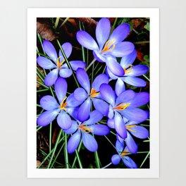 Blue Wildflower Art Print