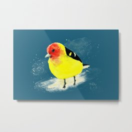 Western tanager with turquoise background Metal Print
