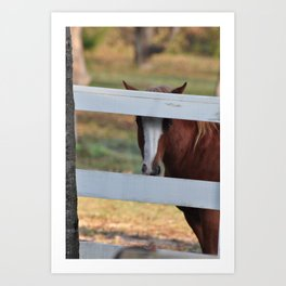 peeking Art Print
