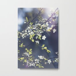 Backlight Blossoms Metal Print