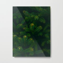 Close Up Of Evergreen Pine Leaves Metal Print