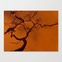 Streetlight Glow Canvas Print