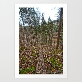 if a tree falls in the woods Art Print
