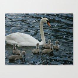Mute Swan & Cygnets Canvas Print