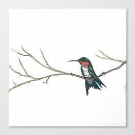 Hummingbird on a branch Canvas Print