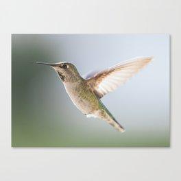 Perfect Posed Hummingbird Canvas Print