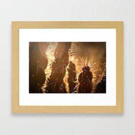Cholla Sunset Framed Art Print