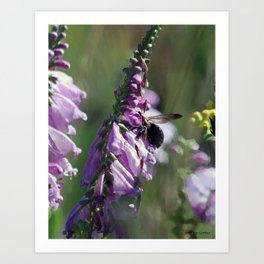 Random bee in my picture Art Print