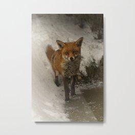 Fox In The Snow Metal Print
