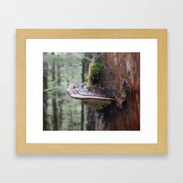 Magical Fungi World   Nature Photography Framed Art Print