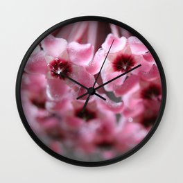 Hoya Wall Clock