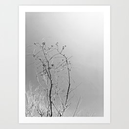 Nature in The City Art Print