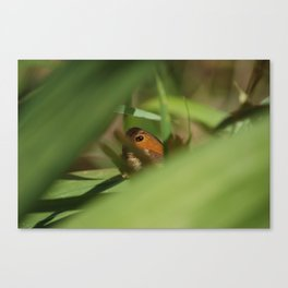 Hiding Butterfly Canvas Print