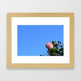 Flower in the Sky Framed Art Print