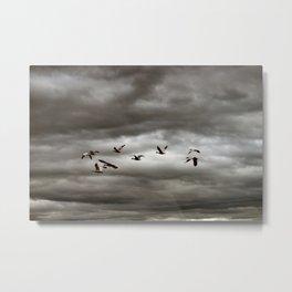 October Storm, Headed Home (Snow Geese) Metal Print