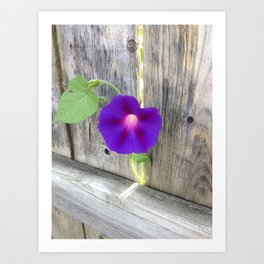 Flower | Flowers | Fence with Purple Flower Art Print