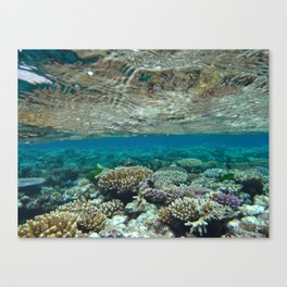 Great Barrier Reef Canvas Print