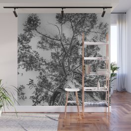 The old eucalyptus tree Wall Mural