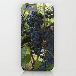 bunch of Isabella grapes in vineyard iPhone Case