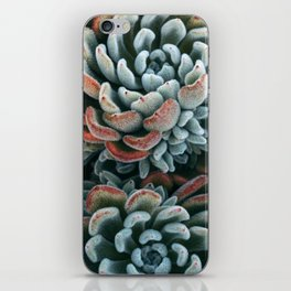 Autumn Succulent #1 iPhone Skin