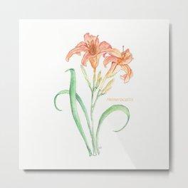 Hemerocallis (Day Lily) Metal Print