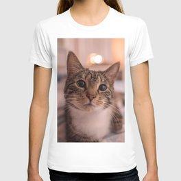 A relaxing kitty / kitten T-shirt