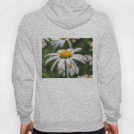White daisy with rainy droplets Hoody