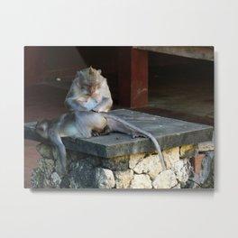 Monkey Massage Metal Print