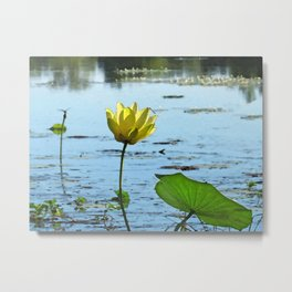 Morning Lotus Metal Print