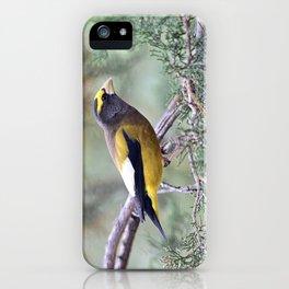 Poised: Evening Grosbeak iPhone Case