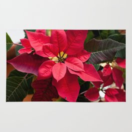 Red and Green Poinsettia Photography Print Rug
