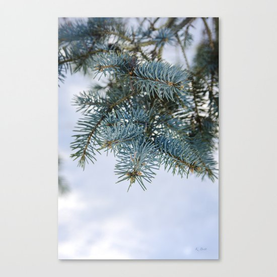 Blue Spruce Canvas Print