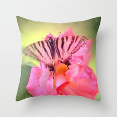 Old Scarce Swallowtail butterfly 2795 Throw Pillow