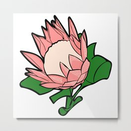 Australian Native Flower - King Protea Metal Print