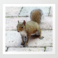 Squirreling Around Art Print