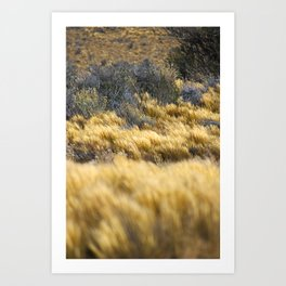 Windy Pampa Gold Herb Art Print