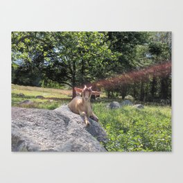 Sunshine and Goats Canvas Print