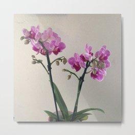 Pink Mini Phalaenopsis Orchid Metal Print