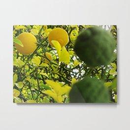 Bicolor lemon tree Metal Print