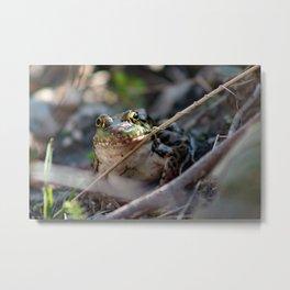 Northern Leopard Frog beautiful portrait Metal Print