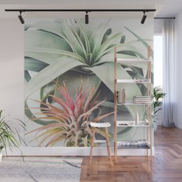 Air Plant Collection III Wall Mural