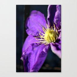 Purple & Yellow Canvas Print
