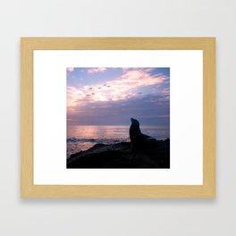 La Jolla Sea Lion Framed Art Print