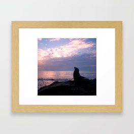 La Jolla Sea Lion Framed Art Print