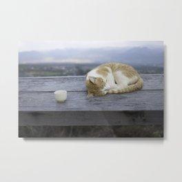 Stray Cat in Vietnam Metal Print