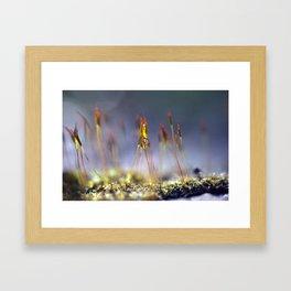 Capillary thread moss 745 Framed Art Print