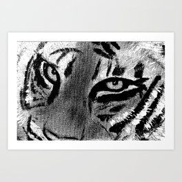 Tiger Eyes - White Art Print