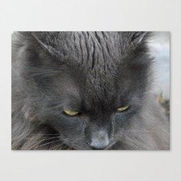 Zeus the cat Canvas Print