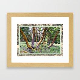 MAGIC MADRONA FOREST Framed Art Print
